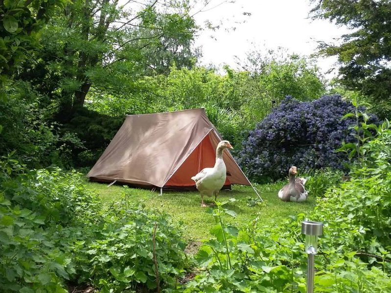 tiny tent pond pitch geese